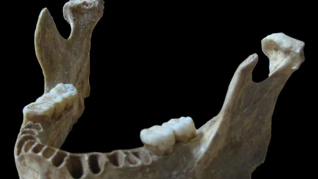 Der Kieferknochen war 2002 in der Oase-Höhle im Südwesten Rumäniens gefunden worden und ist 37 000 bis 42 000 Jahre alt. Foto: Svante Pääbo, Max Planck Institute for Evolutionary Anthropology/Nature/dpa