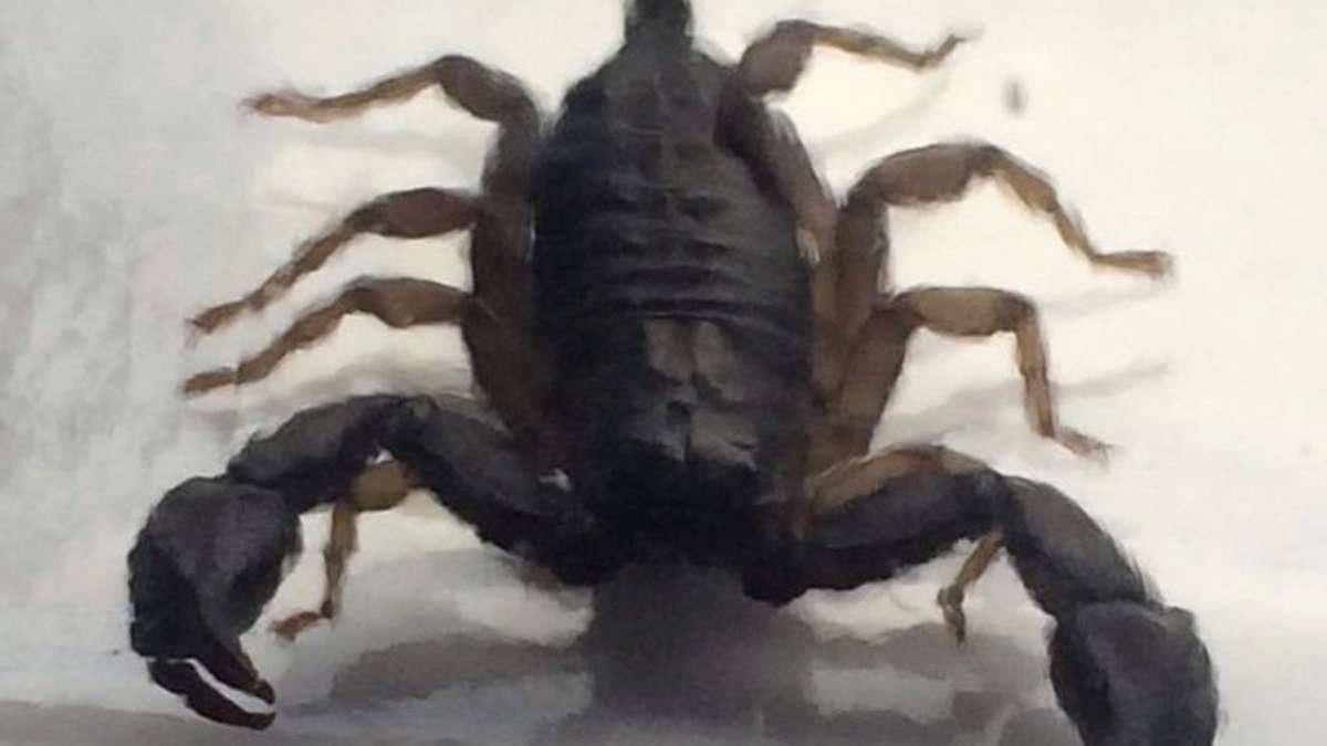 skorpion frau verführen salzburg