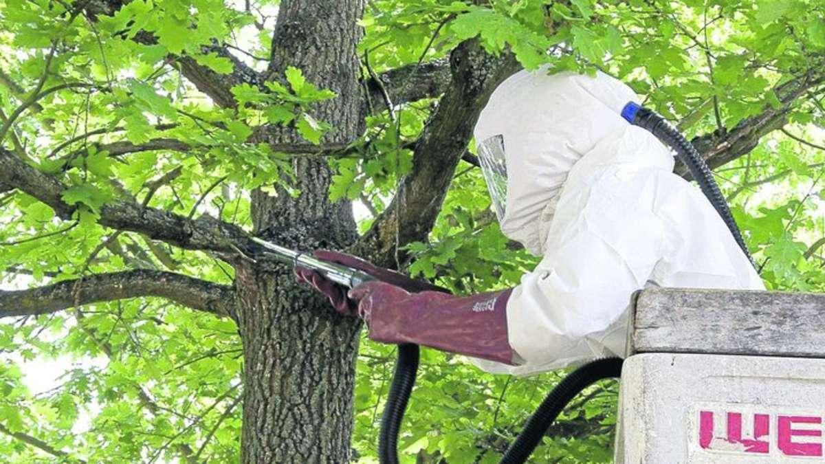 Kletterausrüstung Baumpflege : Baumpfleger steigen offenbach aufs blätterdach um dem gestressten