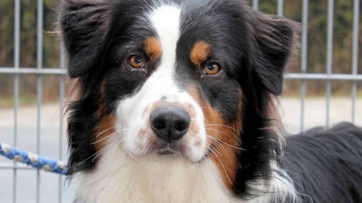 Hund Aus Dem Ausland Eingewöhnen