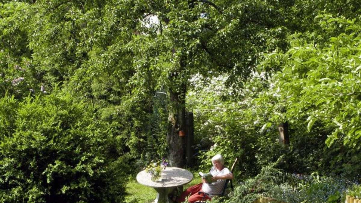gro e b ume gro e schatten pflanztipps f r dunkle ecken wohnen. Black Bedroom Furniture Sets. Home Design Ideas