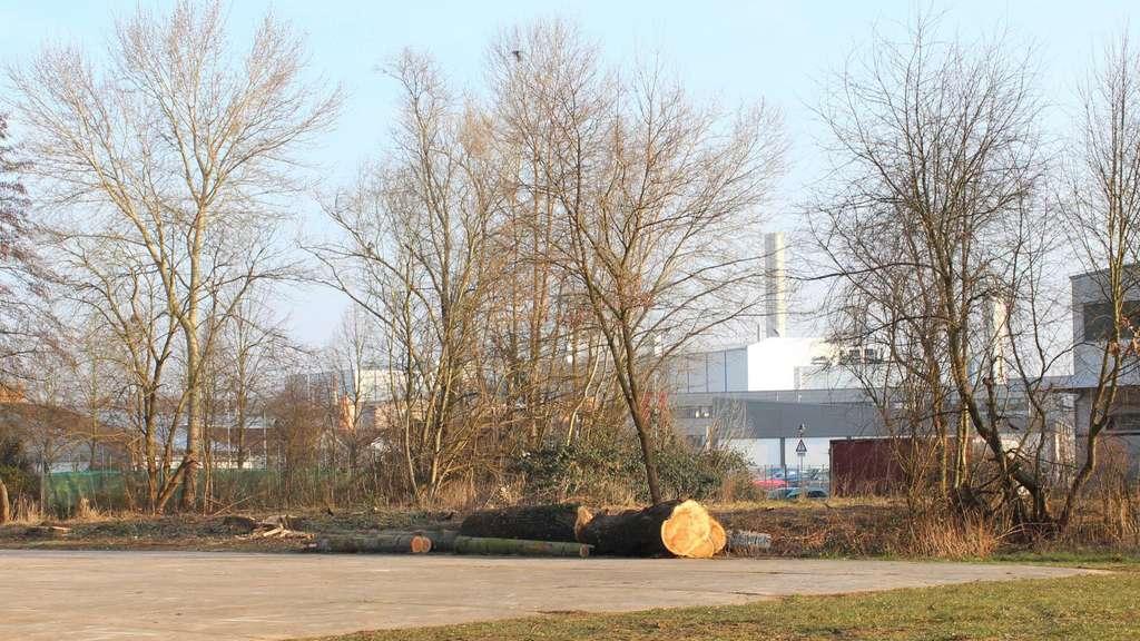Obertshausen: Stadt beginnt mit Arbeiten für Bau der Kita-Container ...