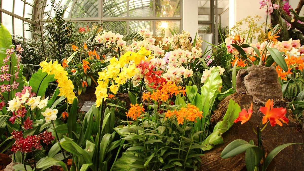orchideen im palmengarten frankfurt bilder frankfurt. Black Bedroom Furniture Sets. Home Design Ideas