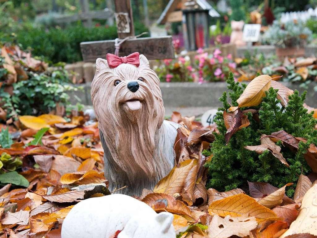 Hanau Mit Dem Hund Ins Familiengrab Hanau